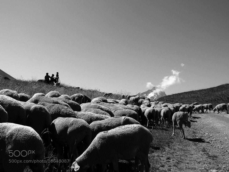 Photograph Troupeau dans les alpages by Thibaut Regis on 500px