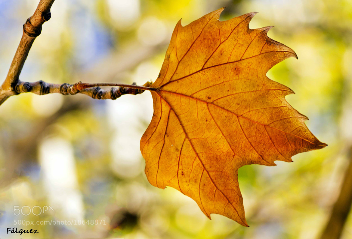 Photograph Otoño by Flavia Falquez on 500px