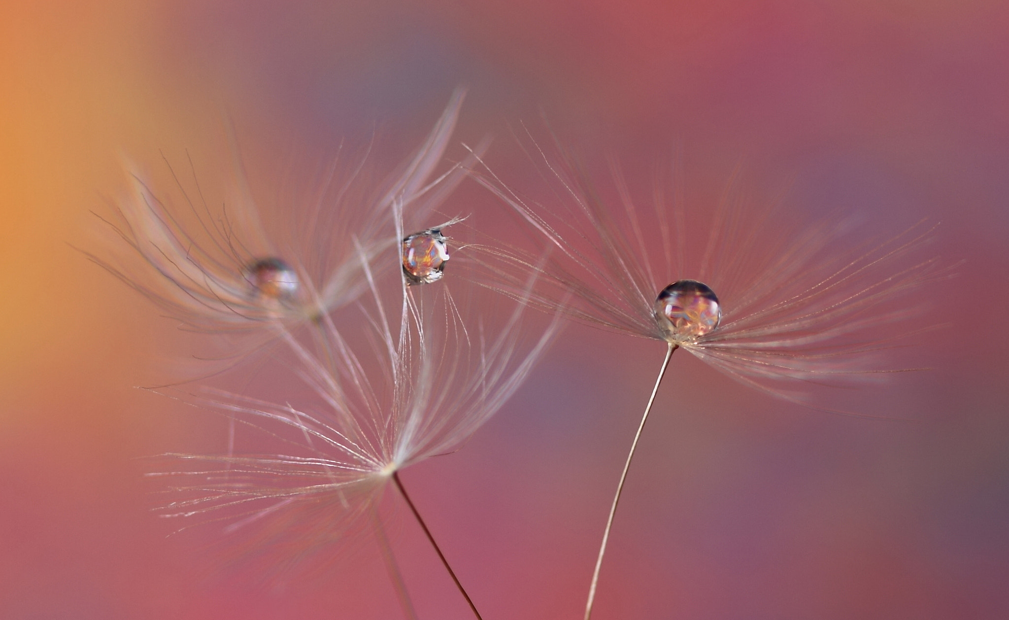 Photograph Triple drops by Gry Heubach on 500px