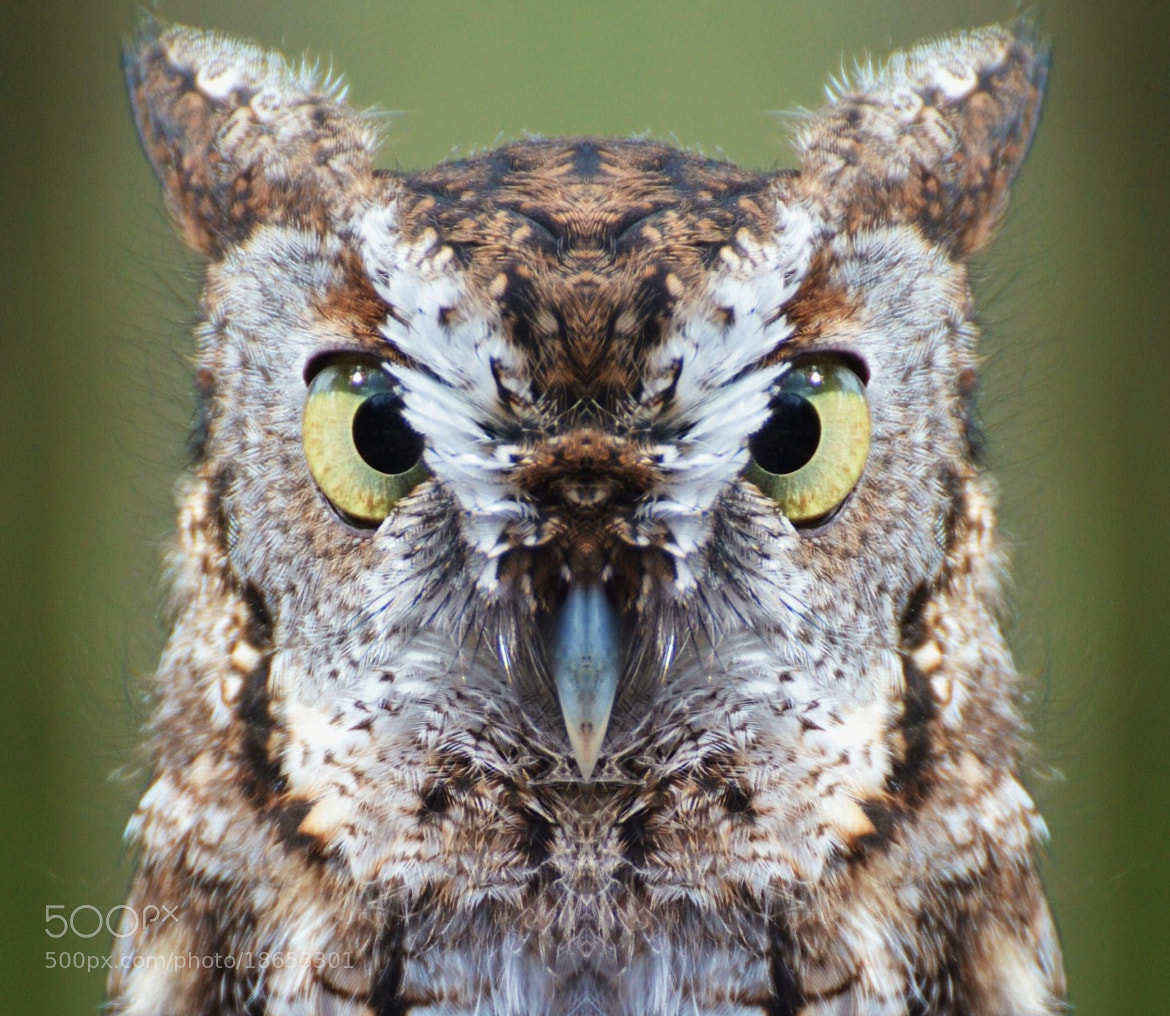 Photograph Staring Contest by Michael Fitzsimmons on 500px