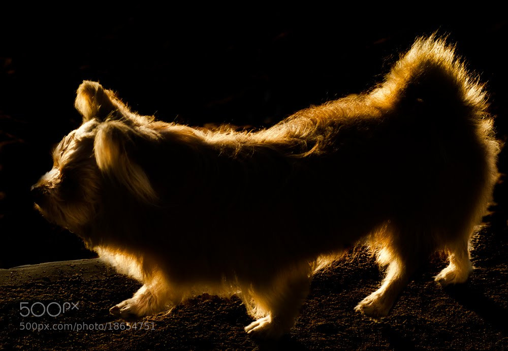 Photograph Dog by thiet_vannguyen on 500px