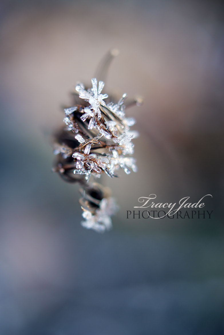 Photograph Frost Crystals by Tracy Jade Photography on 500px