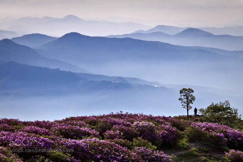 Photograph Hwangmae Mountain at dawn by Yeak Kkot Ahn on 500px