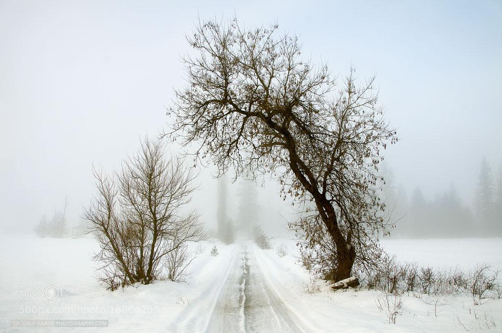 Photograph aperture by Viktoria Haack on 500px