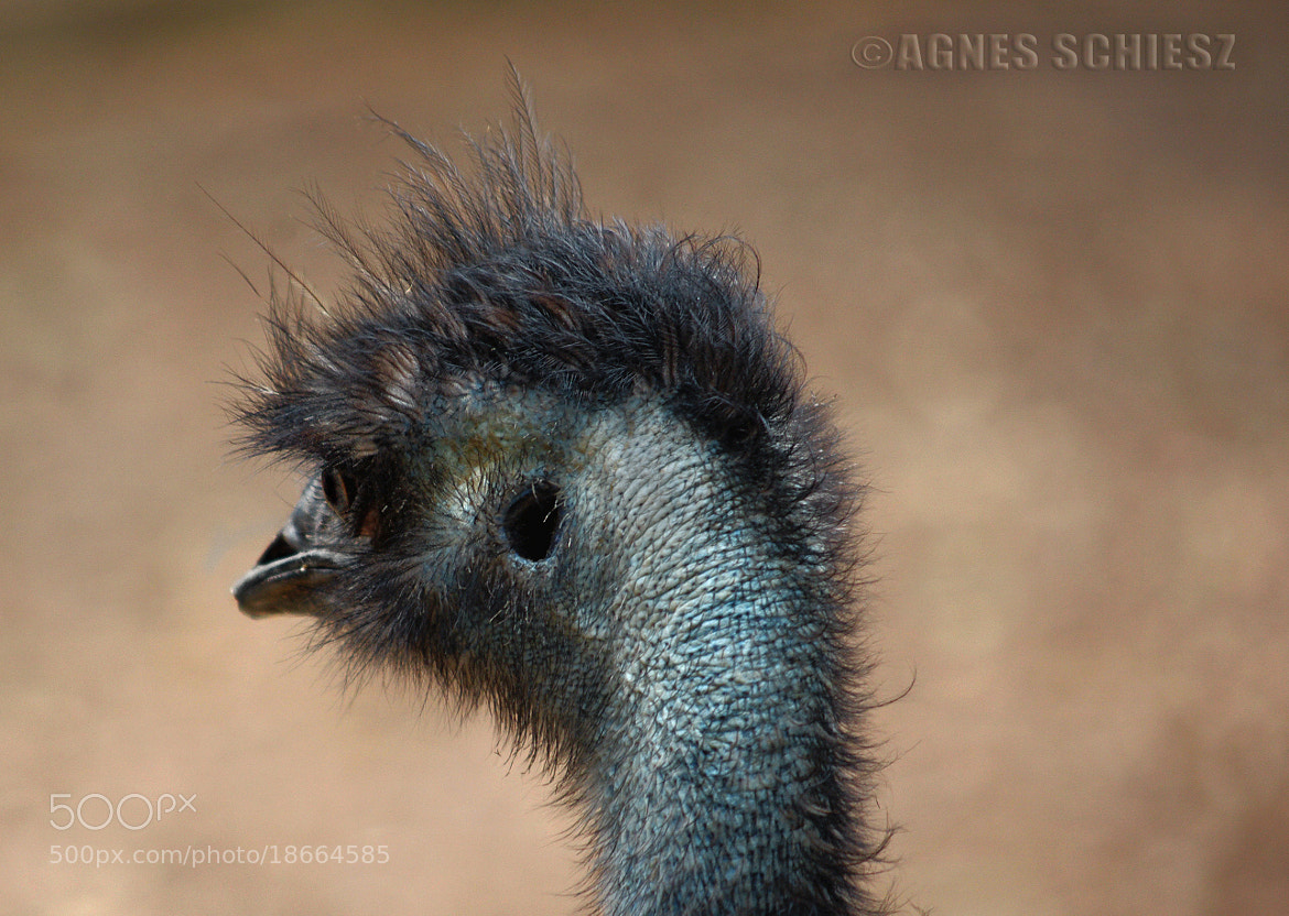 Photograph Keep talking, I'm listening! by Agnes Schiesz on 500px