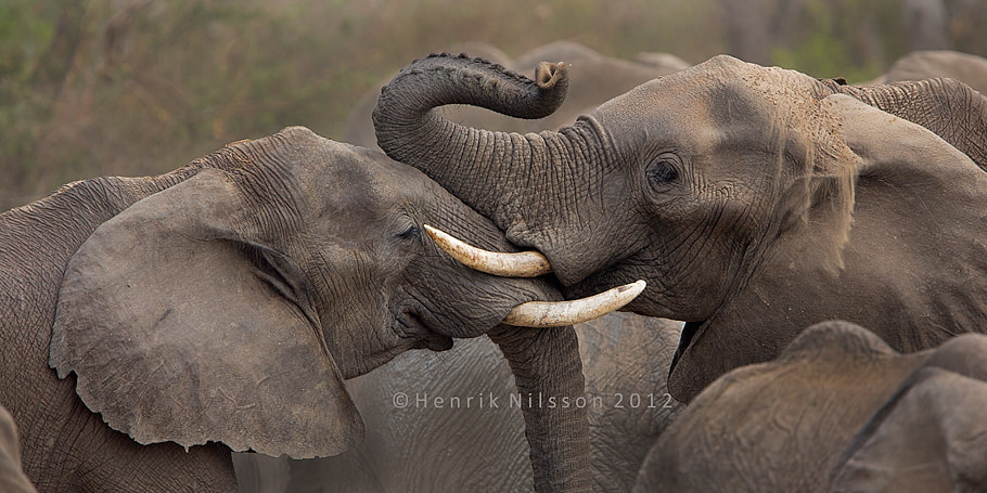 Photograph Friendship by Henrik Nilsson on 500px