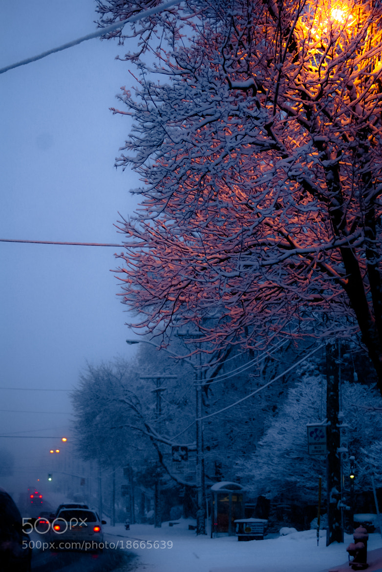 Photograph Colors in Snow by Arun Agrawal on 500px