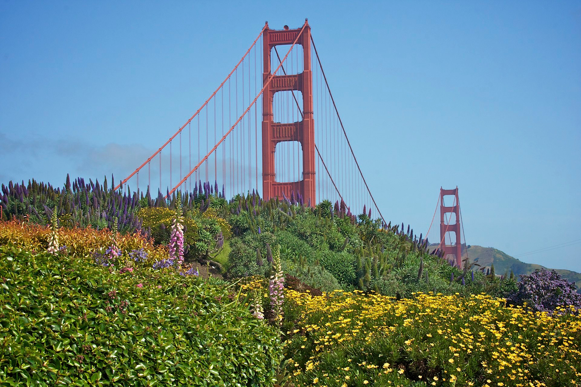 Photograph Flowers and the Golden Gate by Ron Kaplan on 500px