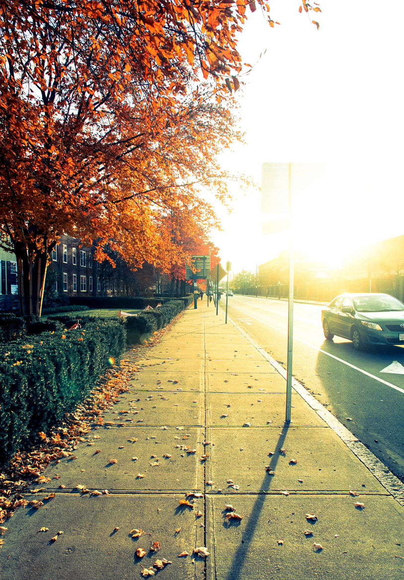 Photograph [ Sunny Autumn Day ]  by Anh Gerrard  on 500px