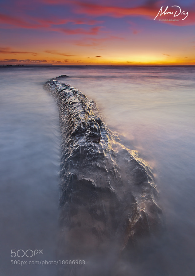 Photograph Backbone by Alonso Díaz on 500px