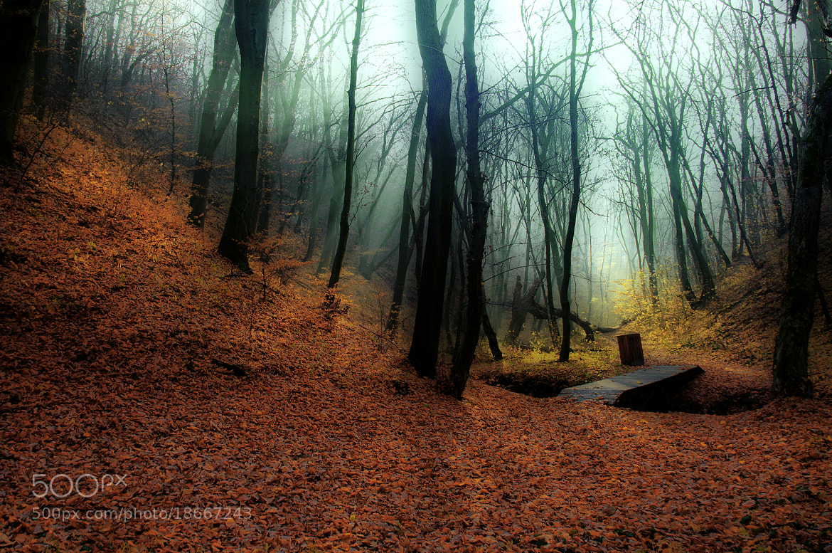 Photograph forest road by Andy 58 on 500px