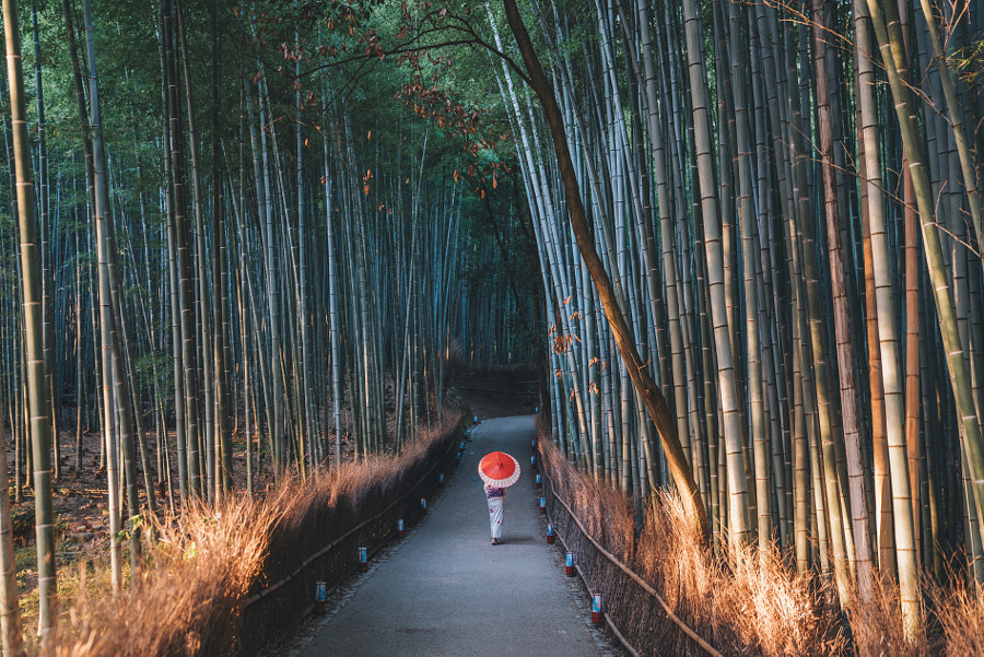 Morning walks through the bamboo forest by Jason Charles Hill on 500px.com