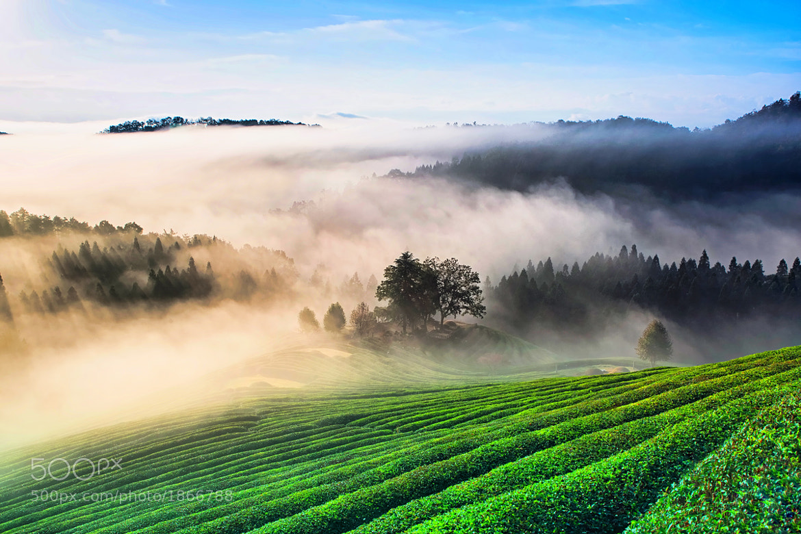 Photograph Green Tea plantation  by Steve Jeon on 500px