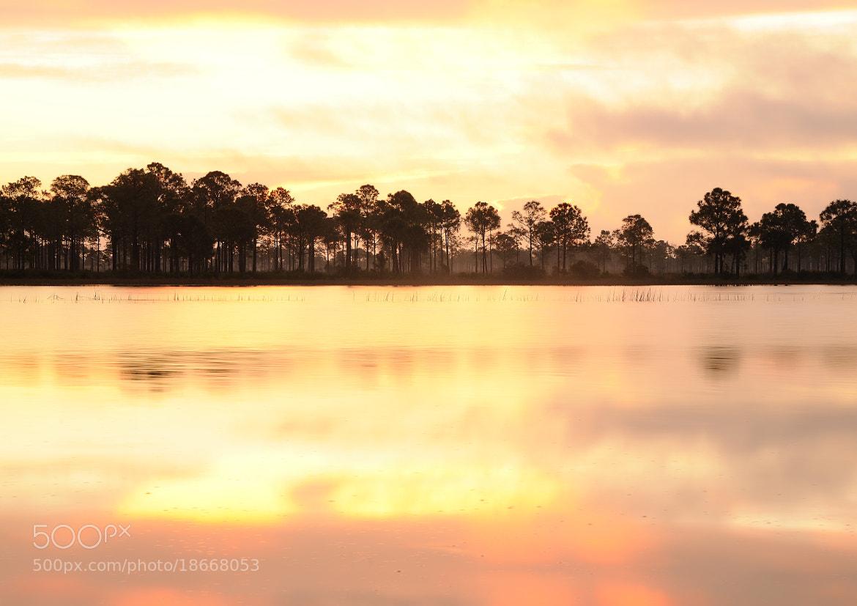Photograph Wild park by Gouzel  on 500px