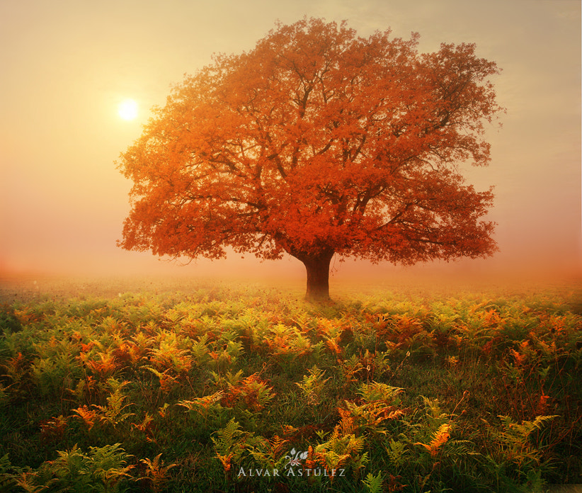 Photograph Red Oak by Alvar Astúlez on 500px