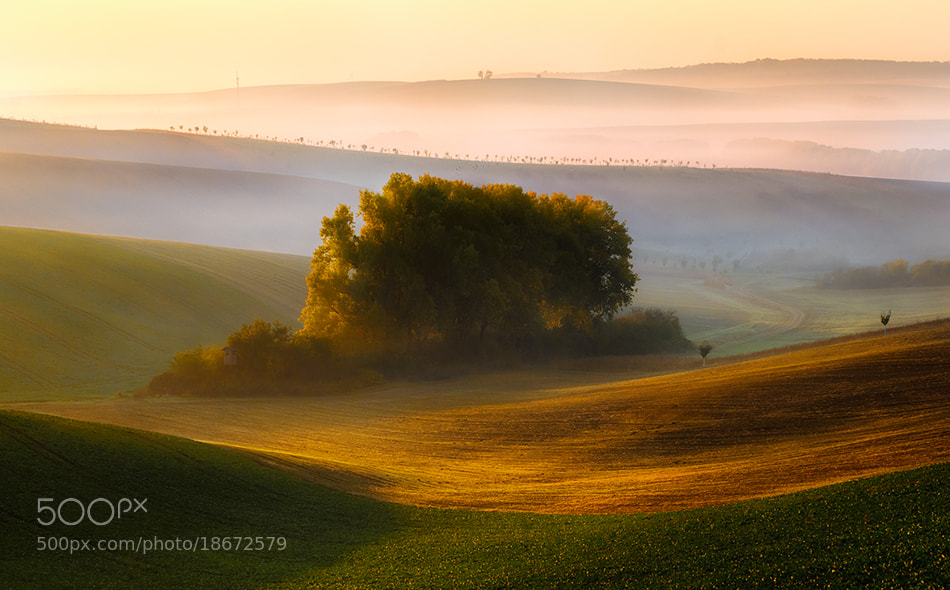 Photograph clump by Piotr Krol on 500px