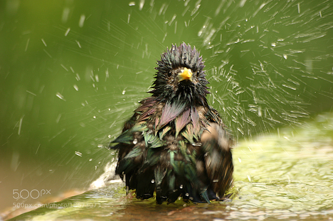 Photograph Bath time by Fatih Kirtiş on 500px