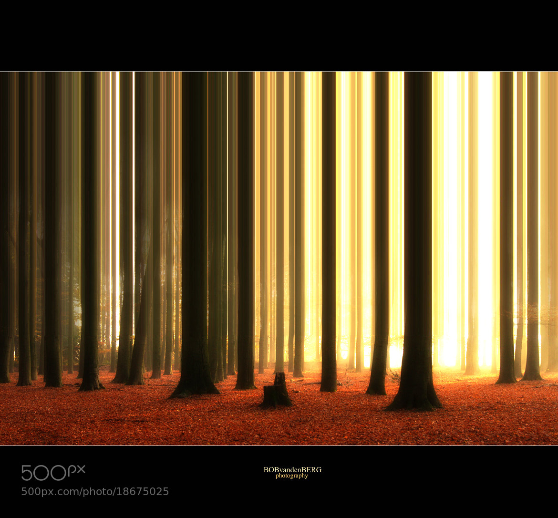 Photograph barcode beeches by bob van den berg on 500px