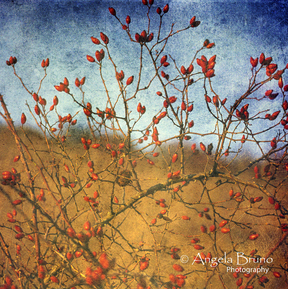 Photograph Rosehip by Angela Bruno on 500px