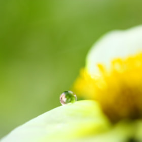A one drop by Yumi Yoshino (YumiYoshino)) on 500px.com