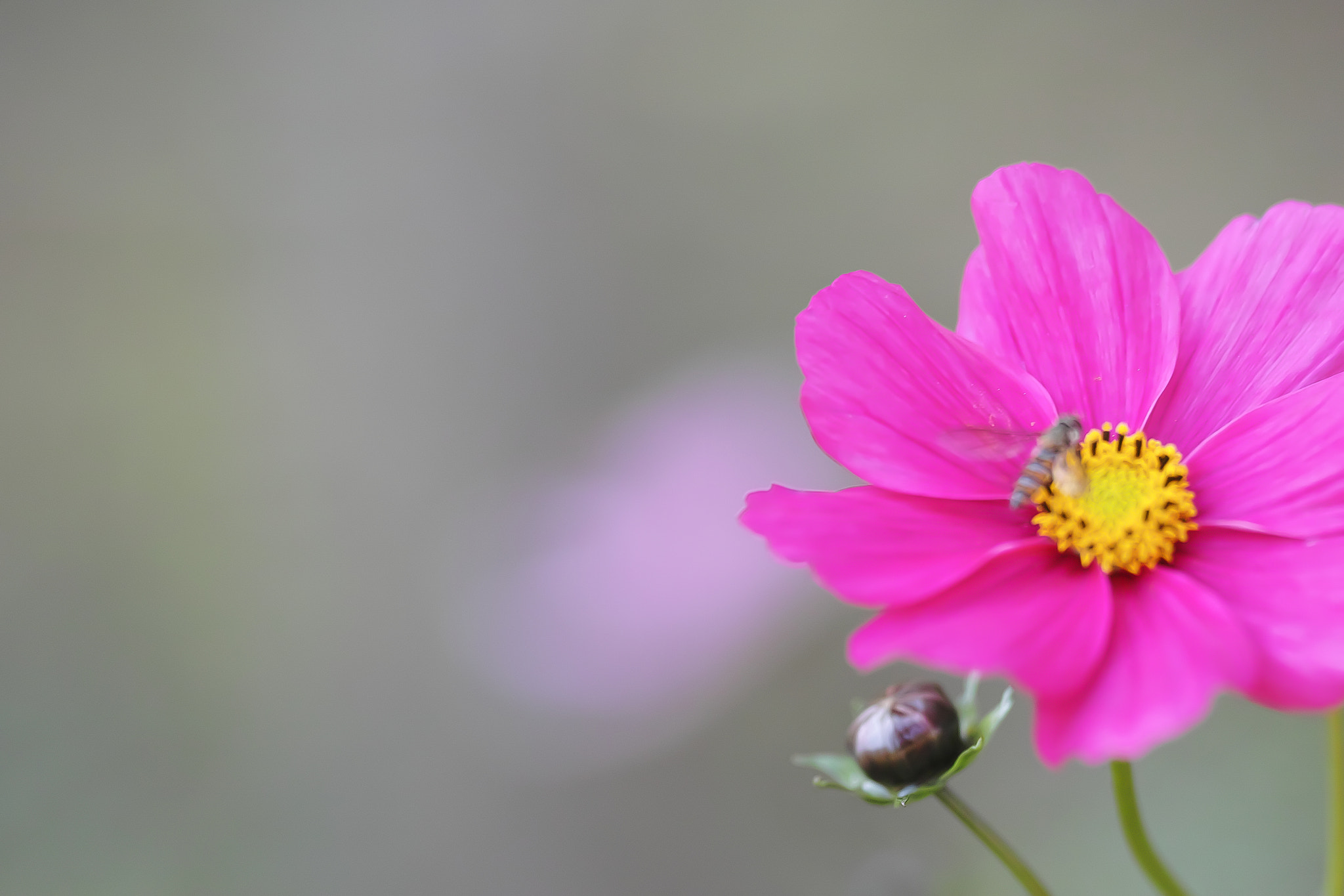 Photograph Cosmos by marbee .info on 500px