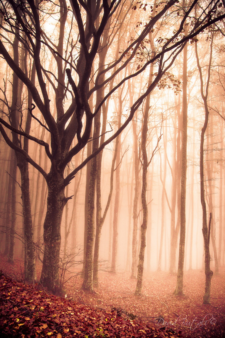 Photograph Forest by David Butali on 500px
