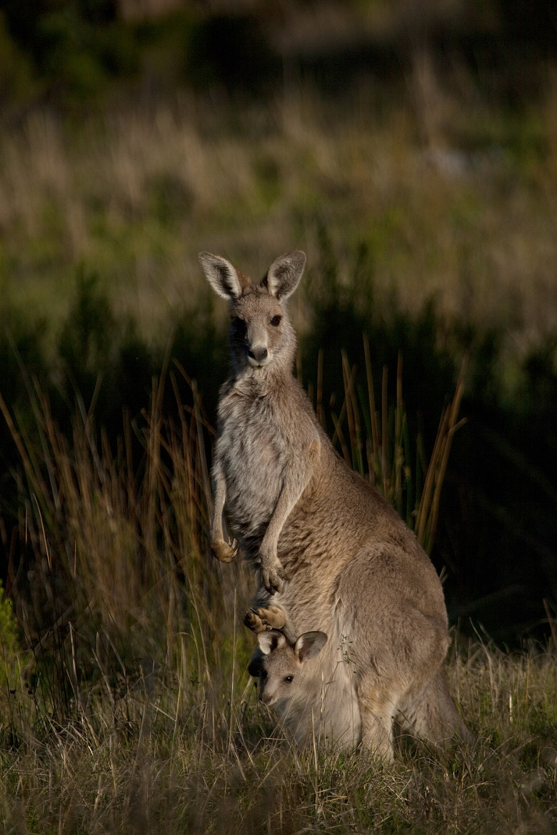 Photograph Mother and child by Alan McIntosh on 500px