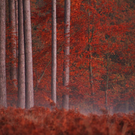 Untitled by Ursula Rodgers (UrsulaRodgers)) on 500px.com