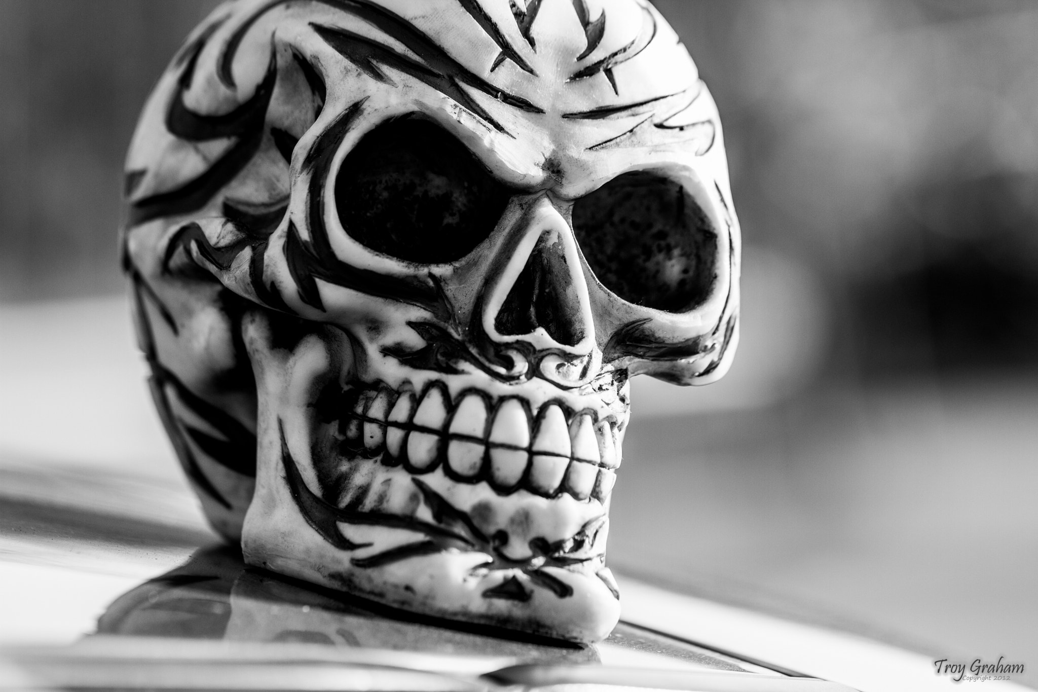Photograph Skull by Troy Graham on 500px