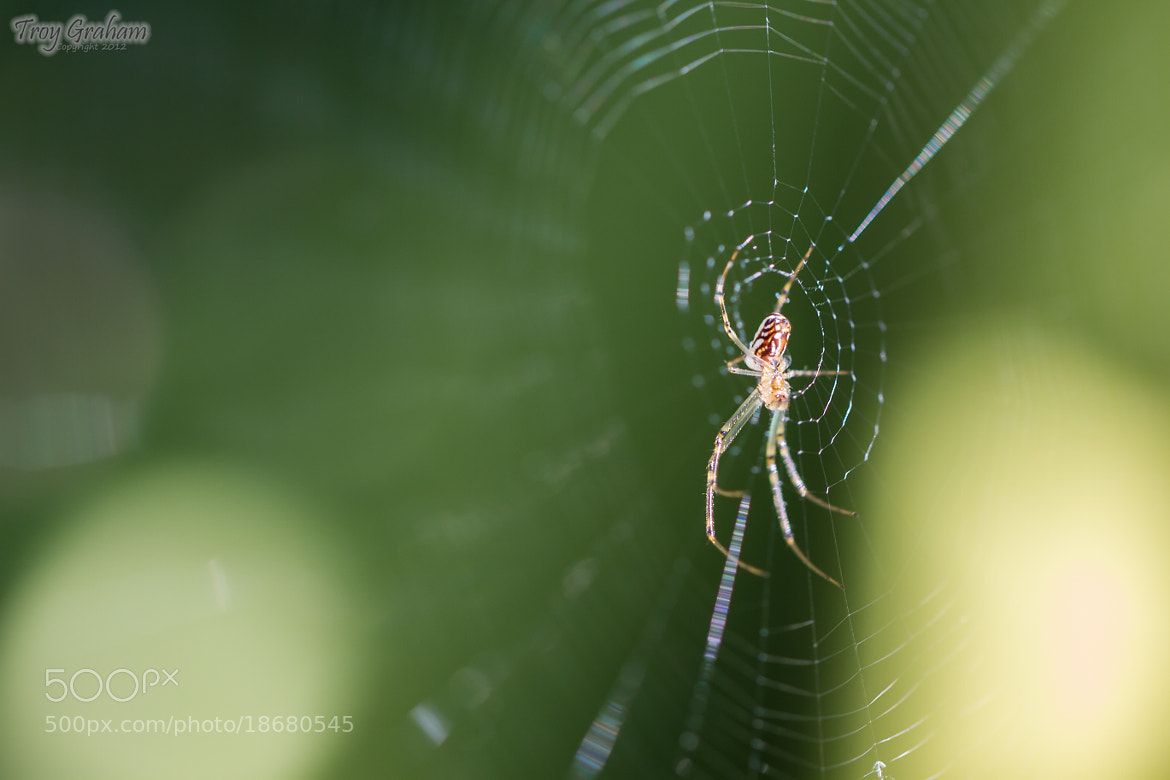 Photograph In the Web by Troy Graham on 500px