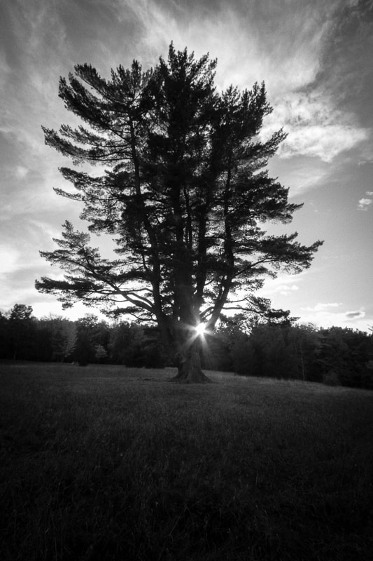 Photograph Sun Shining Through O'Dell Park Tree Photo by Ahmed Dassouki on 500px