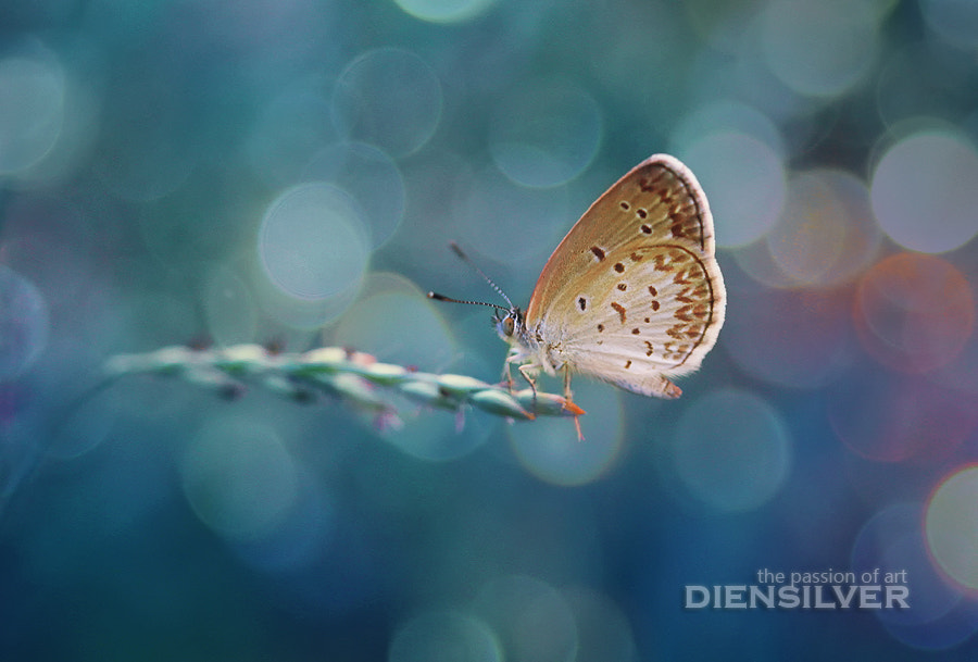 Photograph Almost unreal by Diens Silver on 500px