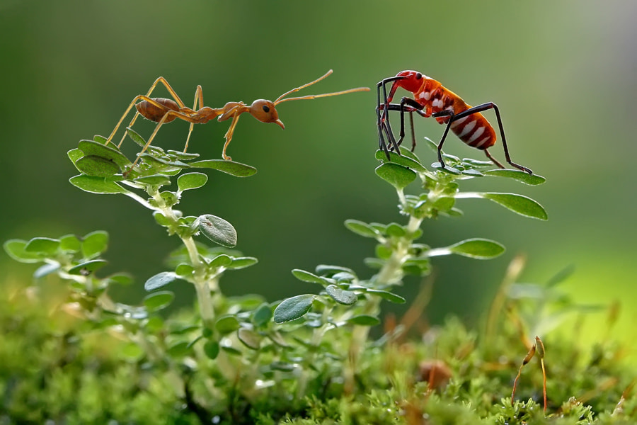 Photograph small world by teguh santosa on 500px
