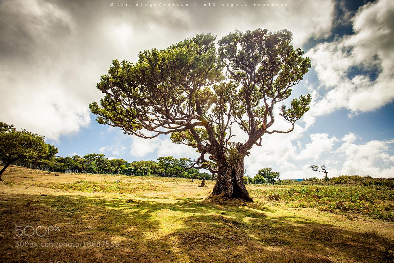 Photograph Tree of Life by Diego Freitas on 500px