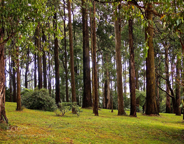 Photograph Dandenong Ranges  by Bhupinder Kumar on 500px