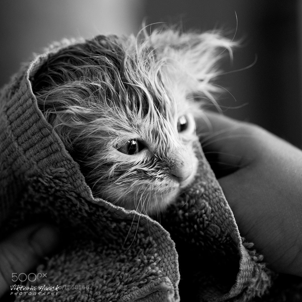 Photograph Yoda by Viktoria Haack on 500px
