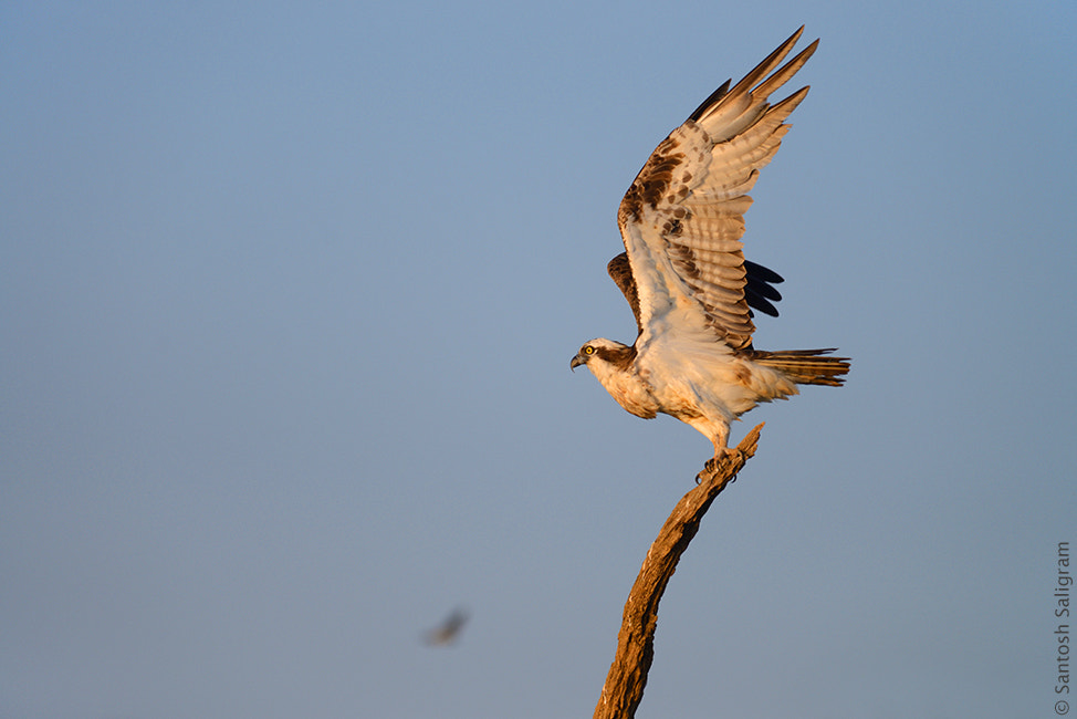 Photograph With Wings Wide Open by Santosh Saligram on 500px