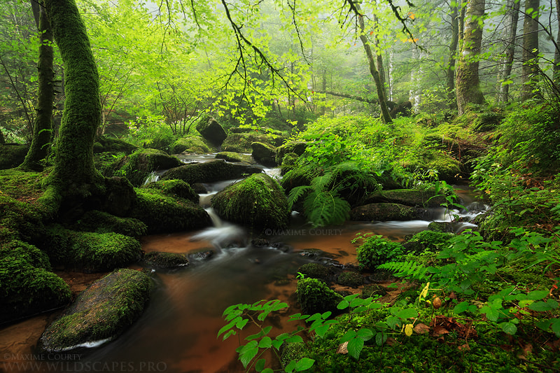 Photograph Peaceful Stream by Maxime Courty on 500px