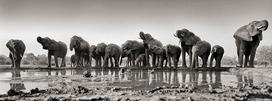 The Waterhole by greg du toit on 500px.com