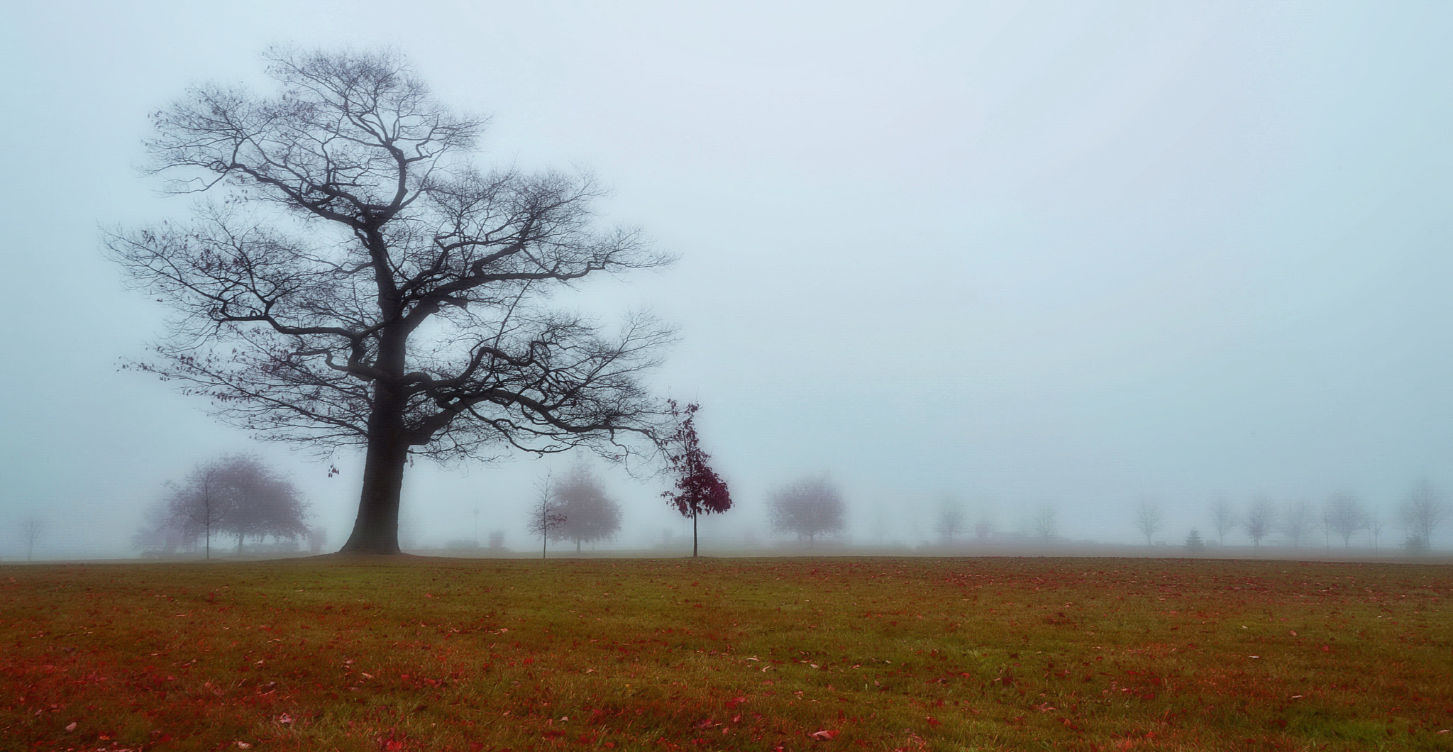 Photograph Foggy Tree by AZ Imaging on 500px