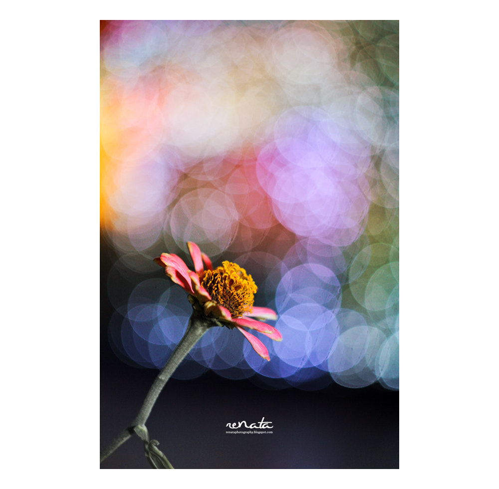 Photograph flower by Renata photographie on 500px