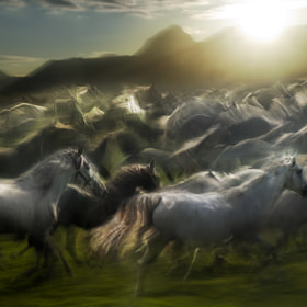 Stampedo by Milan Malovrh (elfot)) on 500px.com