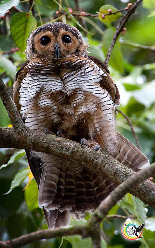 Photograph OWL by Andy Fu on 500px