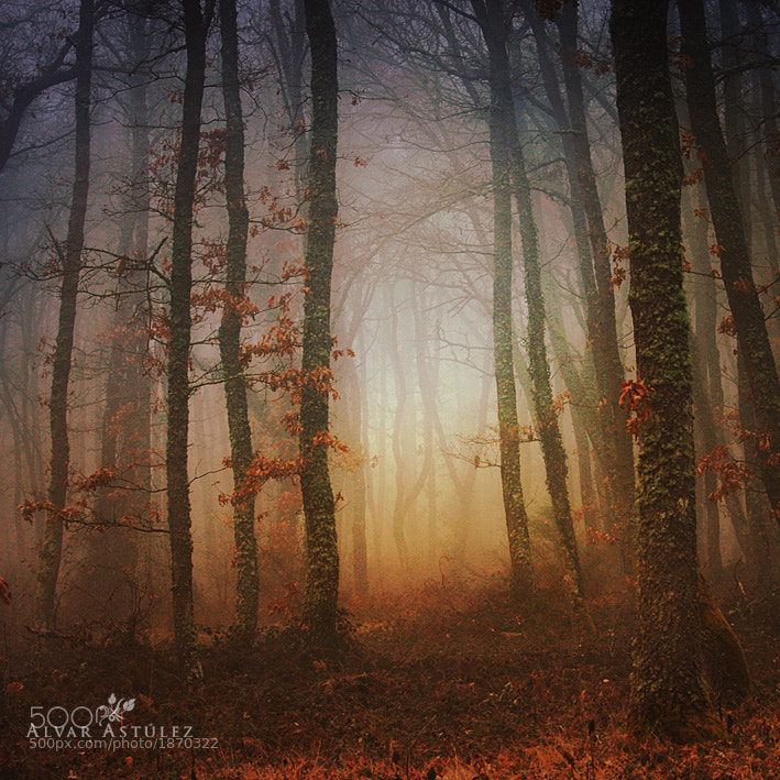 Photograph The dreams of the forest by Alvar Astúlez on 500px