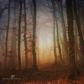 The dreams of the forest by Alvar Astúlez (alvar_astulez)) on 500px.com