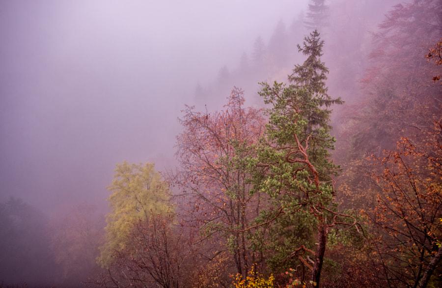 Morning at Neuschwanstein area