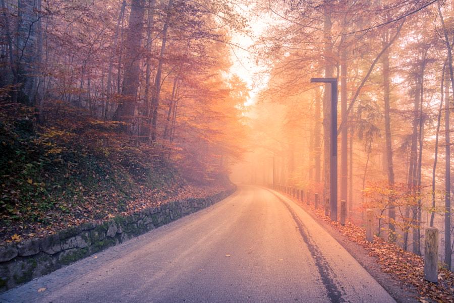 Morning road from Neuschwanstein