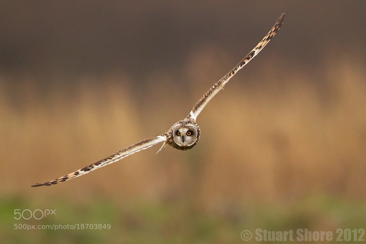Photograph 'Gliding' by Stuart Shore on 500px