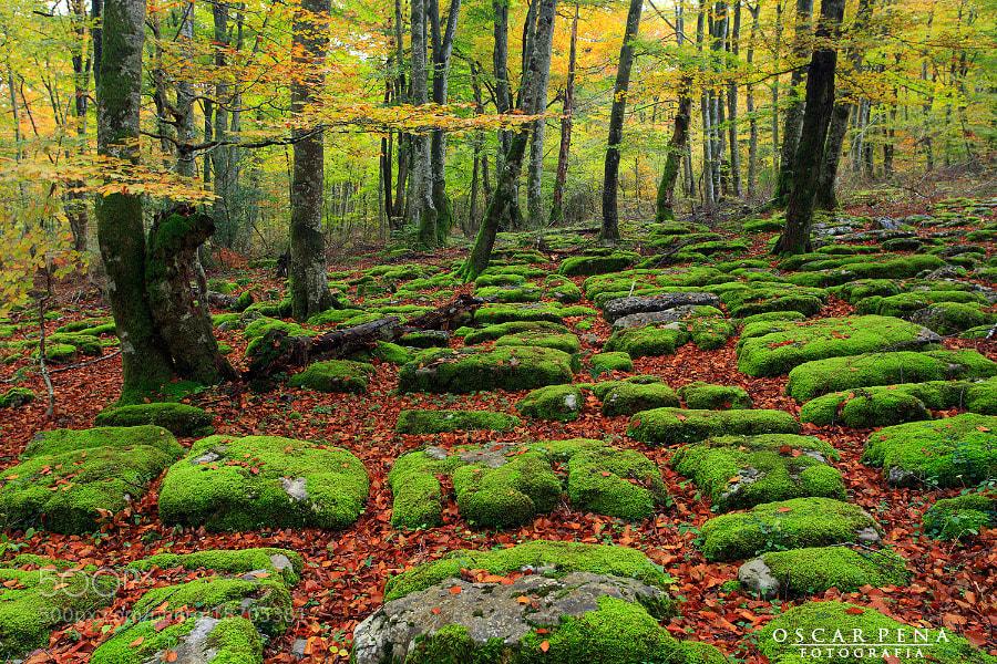 Photograph - Prodigiosa natura - by Oscar  Peña on 500px