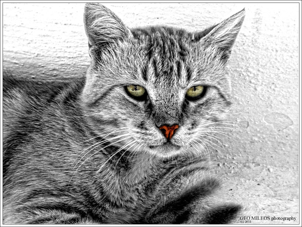 Photograph kitty II by gmileos on 500px
